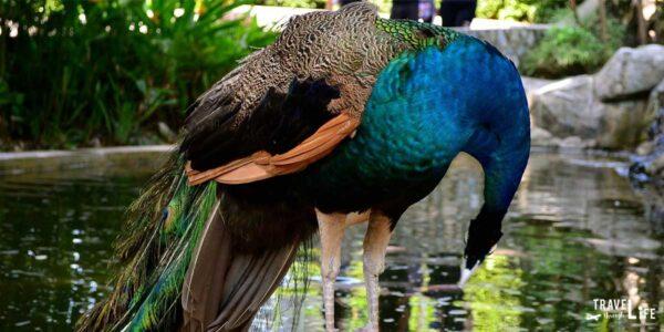 Kuala Lumpur Bird Park Malaysia Travel Guide