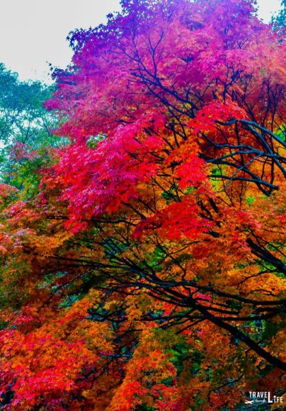 South Korea Fall Foliage at Naejangsan National Park