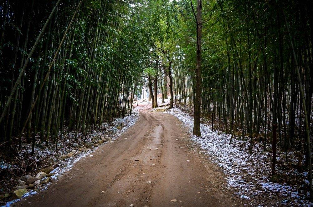 Bamboo Lined Pathway behind Songgwangsa, Suncheon