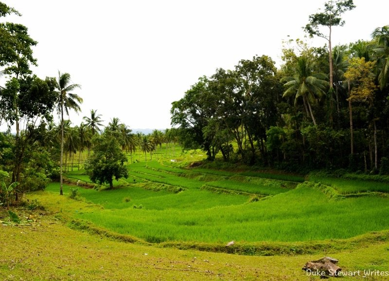 The Philippines, Bohol - Rice Terrace