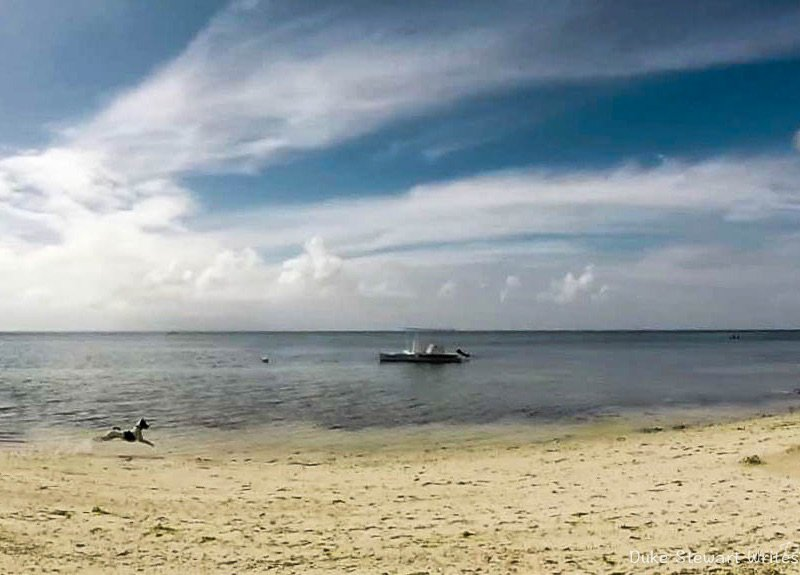 commentaries bohol tour This day trip around bohol island exposes you to breathtaking natural scenery,  centuries-old  insightful anecdotes & commentary from a local guide.