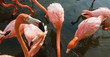 Orlando - More than Disney. Gatorland by David M. Simpson via Trover.com
