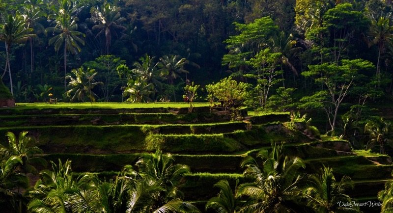 Life through Travel Writing Bali Rice Terraces