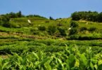 Visiting Hadong South Korea for Perfect Sunday Green Tea