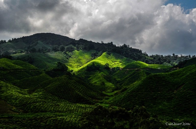 Sun and shade on the Boh Tea Plantation in the Cameron Highlands, Malaysia