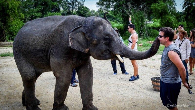 Elephant Kisses at the Elephant Retirement Park near Chiang Mai, Thailand