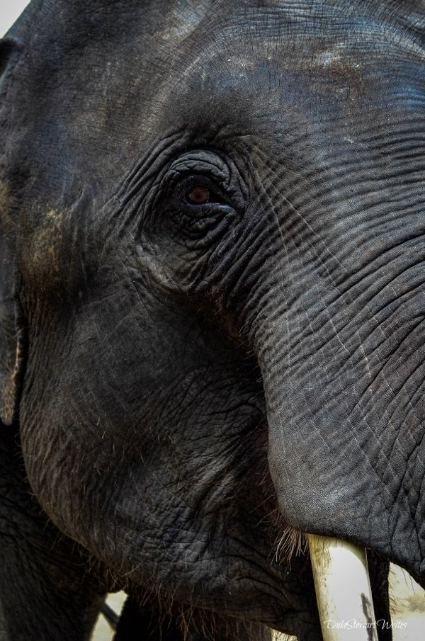 Happy Elephants at the Elephant Retirement Park near Chiang Mai, Thailand