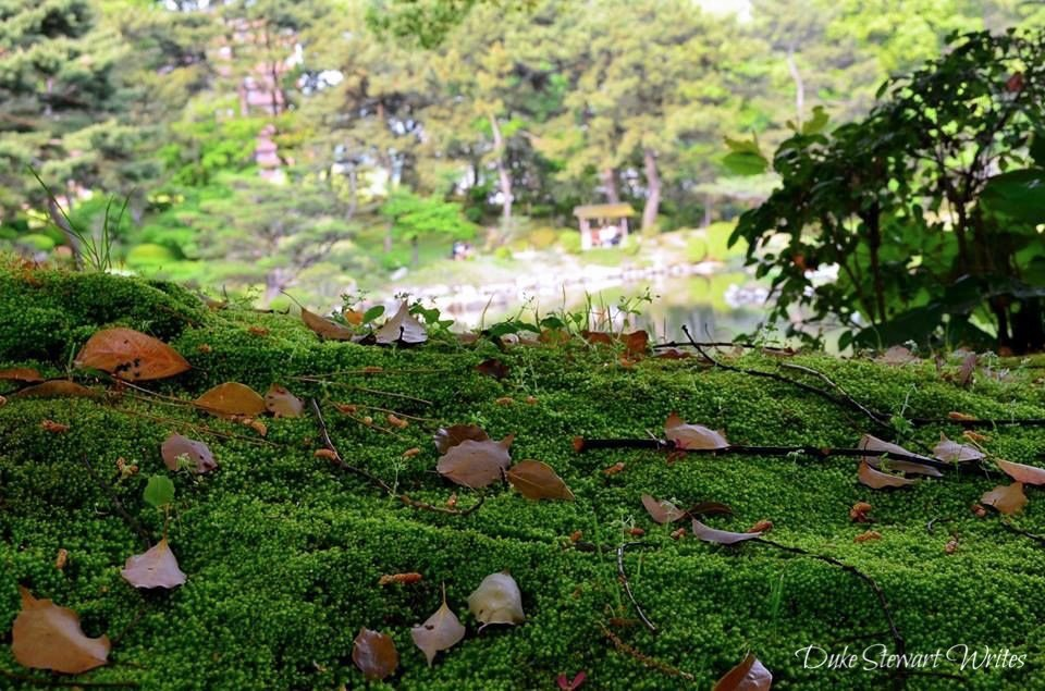 Beautiful Green Moss, Shukkeien in Hiroshima