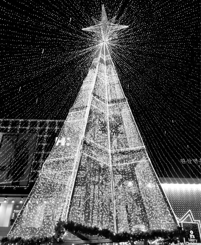 Busan Christmas Tree Festival Photo by Ross Everett via Trover.com