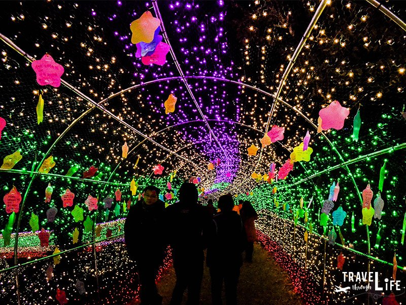 Places to Visit in South Korea Boseong Tea Plantation Light Festival