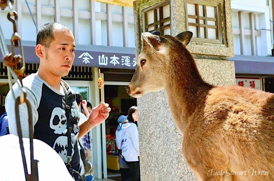Standoff in Miyajima, Japan