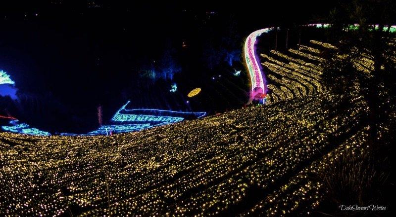 The Boseong Green Tea Plantation Light Festival, South Korea