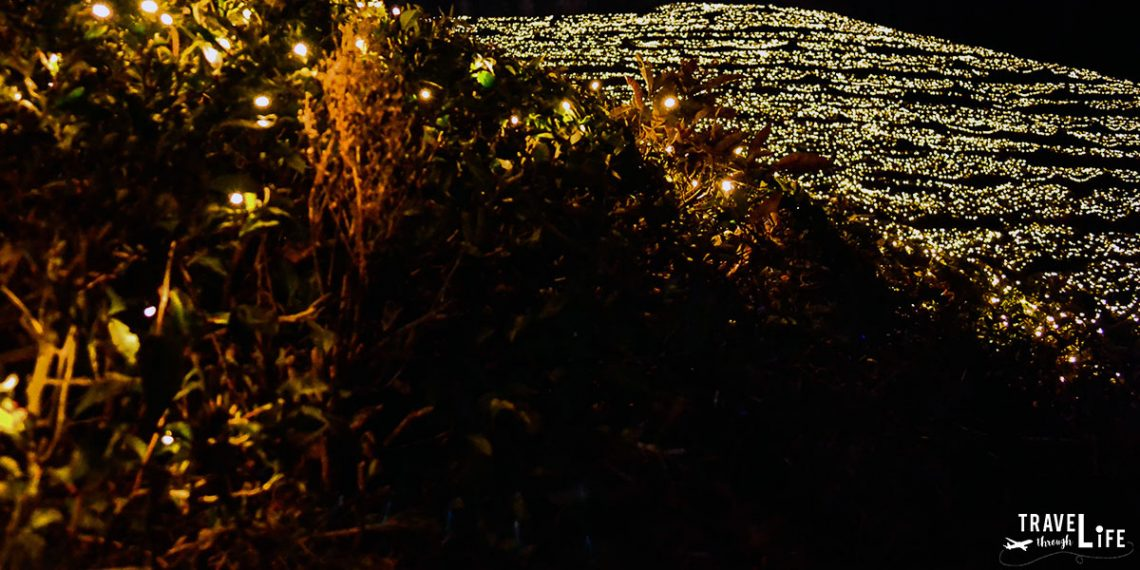 The Boseong Tea Plantation Light Festival and Korean Christmas