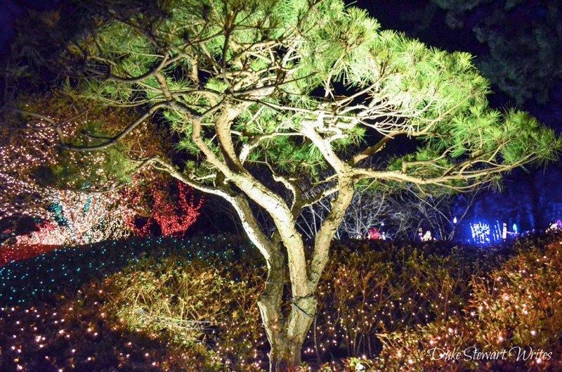 Tree and lights near Boseong's Yulpo Beach, South Korea