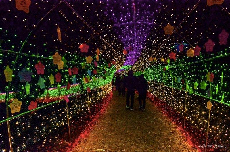 Walking through the Boseong Green Tea Plantation Light Festival, South Korea