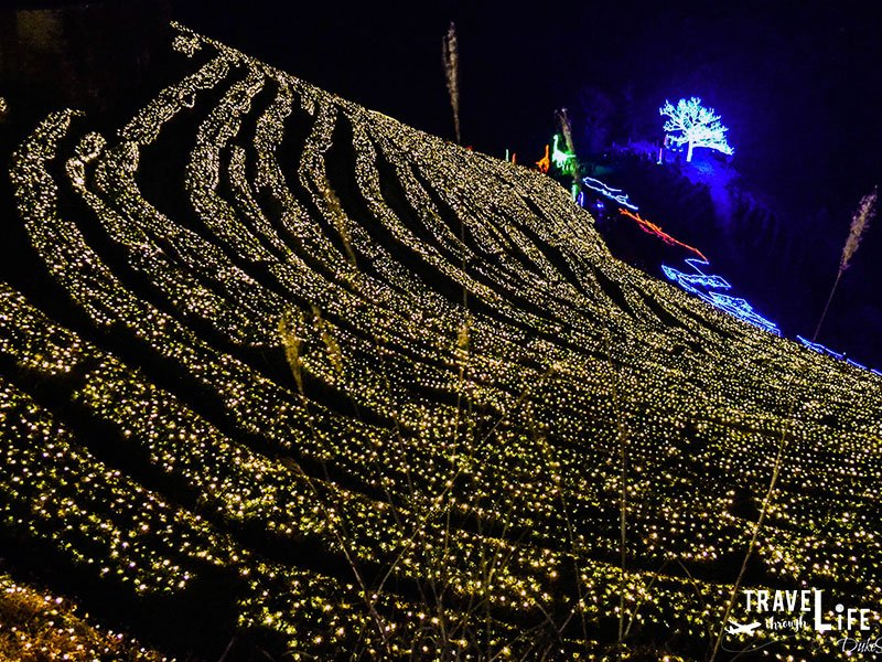 Where to go in Korea Boseong Tea Plantation Light Festival