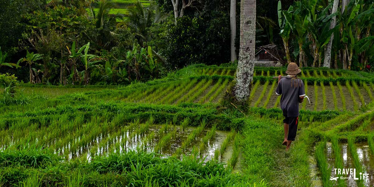 Is Bali Worth Visiting Travel Guide
