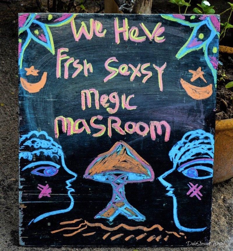 Magic Mushrooms on Gili Air