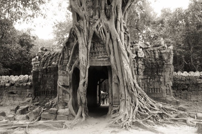 Overgrown tree at the East Mebon Complex near Angkor, Cambodia