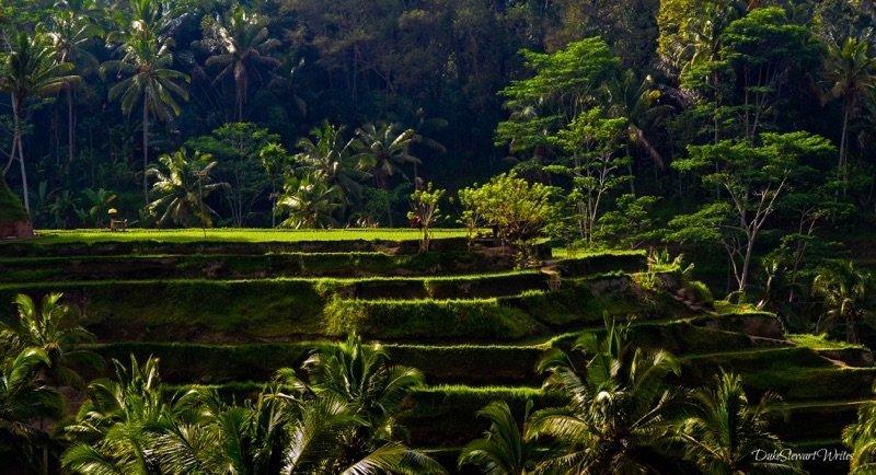 Rice Terrace in Bali Indonesia