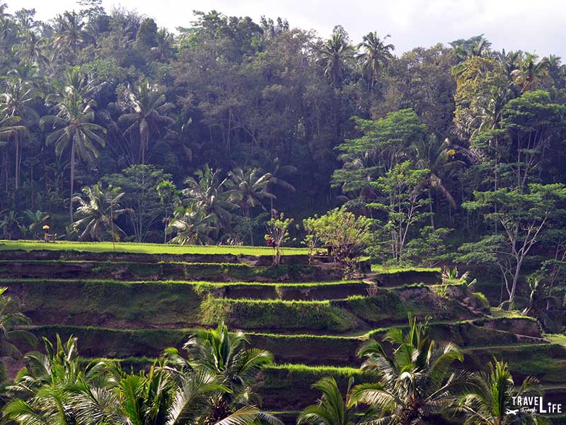 Things to do in Bali Travel Guide Visit Rice Terraces