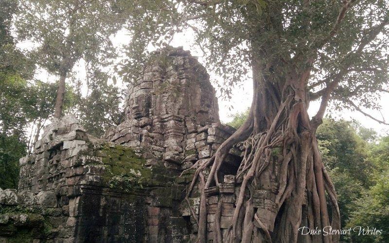 Tree Overgrowth at Ta Som near Angkor in Cambodia
