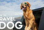 How to Travel With Your Dog by Perrin Carrell