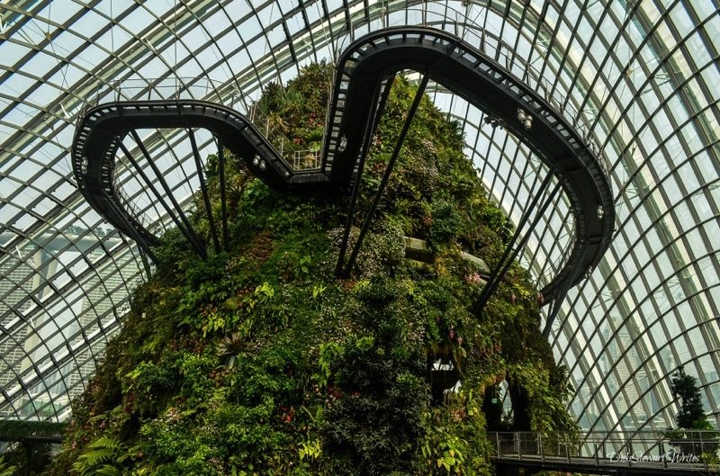 Looking up at the Singapore Cloud Forest