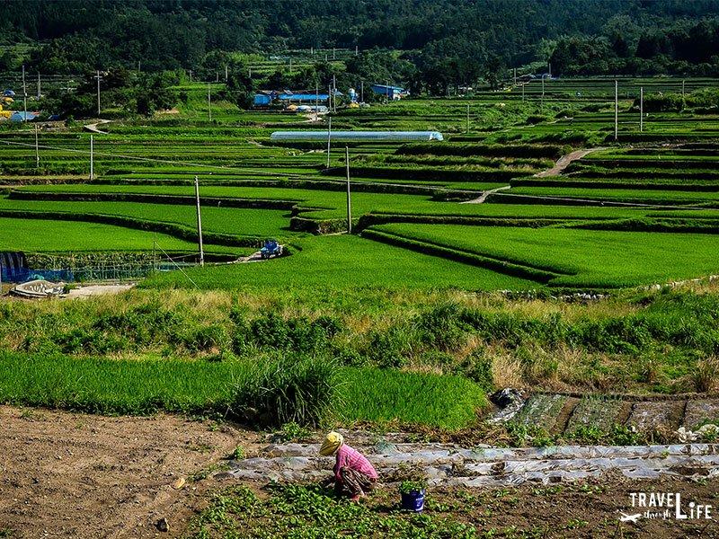 Rural Korea Attractions Dolsan Island