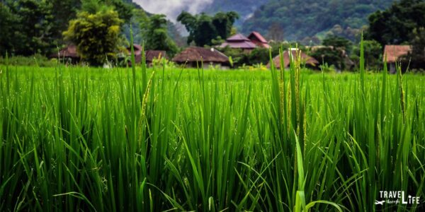 Northern Thailand Pai Travel Guide