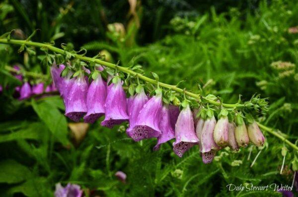 Duke Gardens Flowers