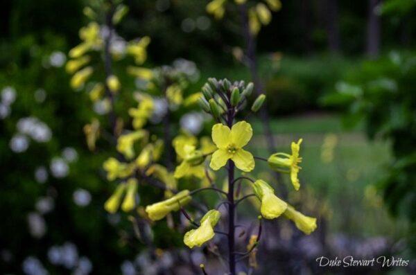 Duke Gardens Flowers Blooming