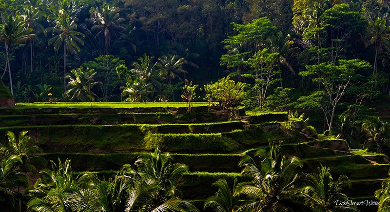 Indonesia Bali Rice Terraces