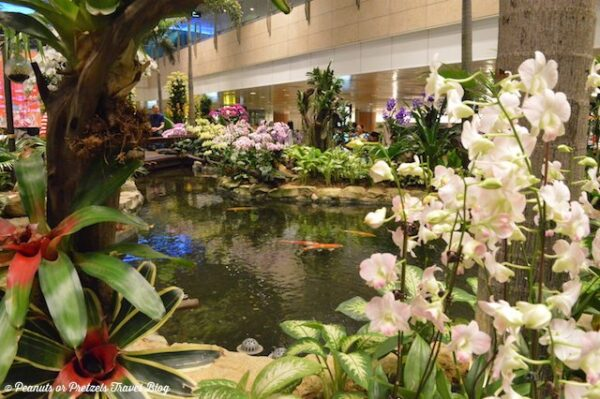 Singapore Changi Airport Orchid Garden Photo by Peanuts or Pretzels