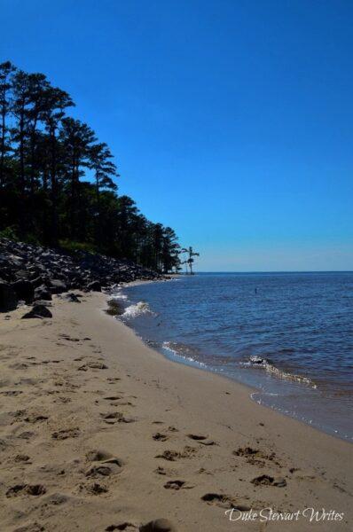 Croatan National Forest Pine Cliff Beach