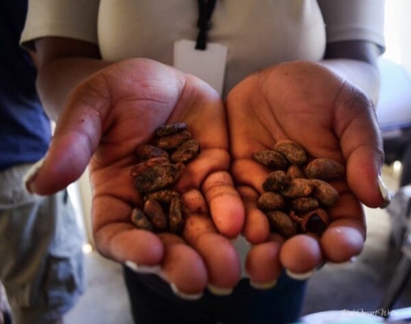 Chocal Chocolate Beans Puerto Plata
