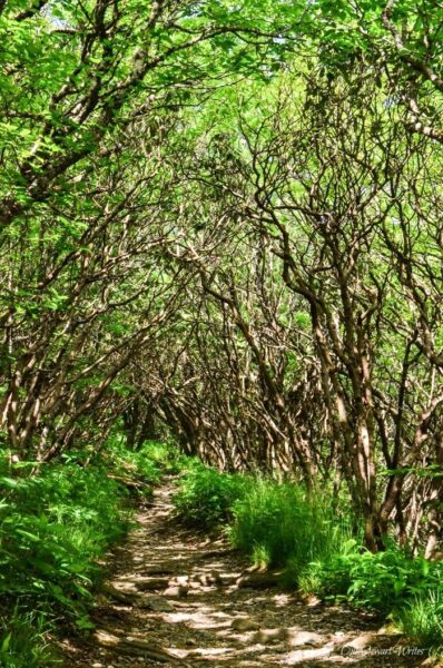 North Carolina Craggy Gardens Trail