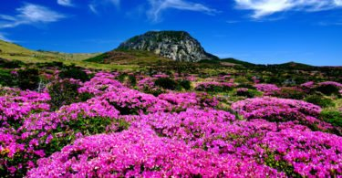 How to Enjoy Jeju Island on a Long Weekend