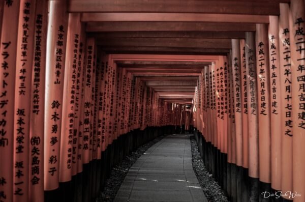 So Many Fushimi Inari Torii Gates