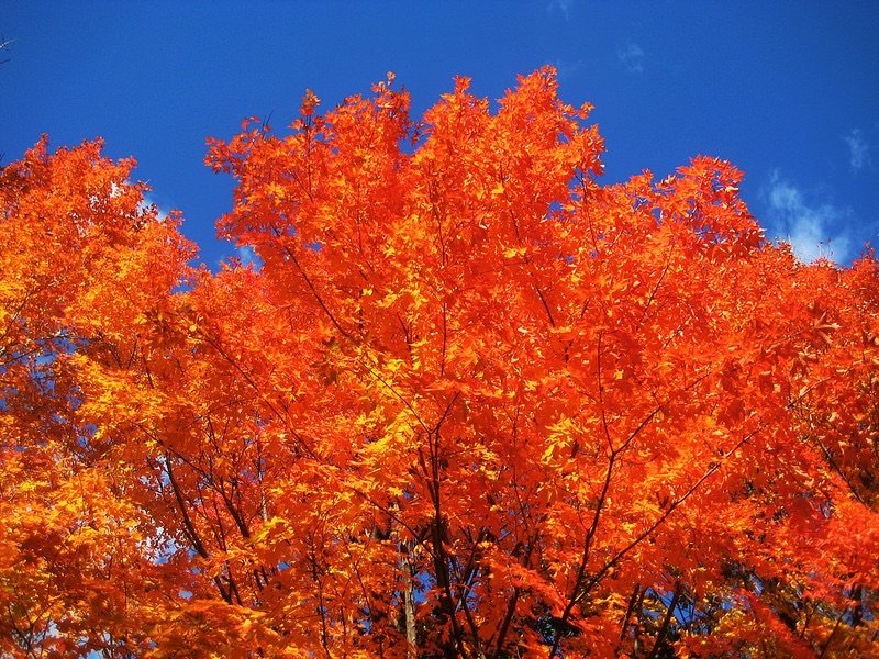 Toronto Foliage Image via Flickr by imposible