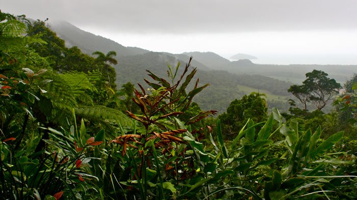 Daintree Rainforest Photo by Flickr User Kyle Taylor via Flickr CC