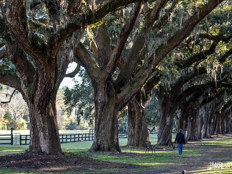 Charleston South Carolina Plantation District