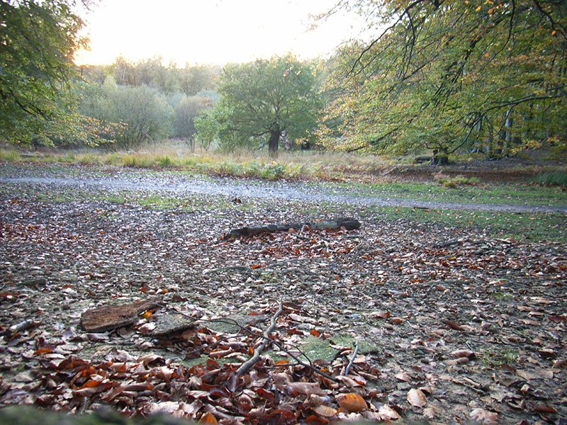 Image of Epping Forest by Geoid via Flickr Creative Commons Non-Commercial