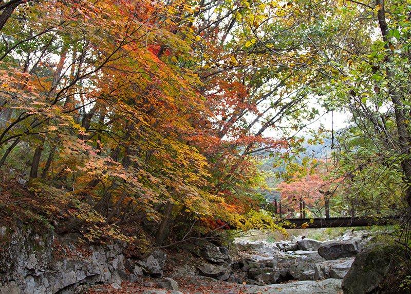 Fall in South Korea Garden of the Morning Calm
