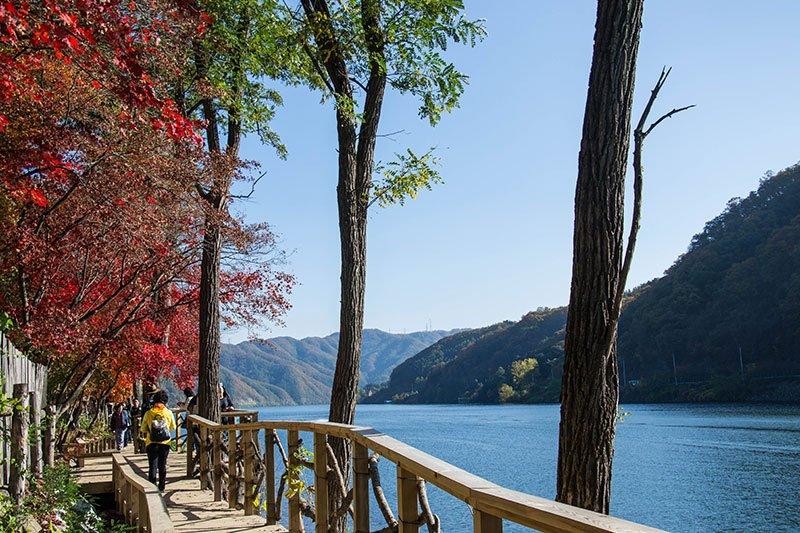 Fall in South Korea Nami Island