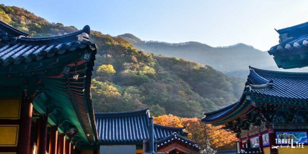 The Ultimate South Korea Fall Travel Guide