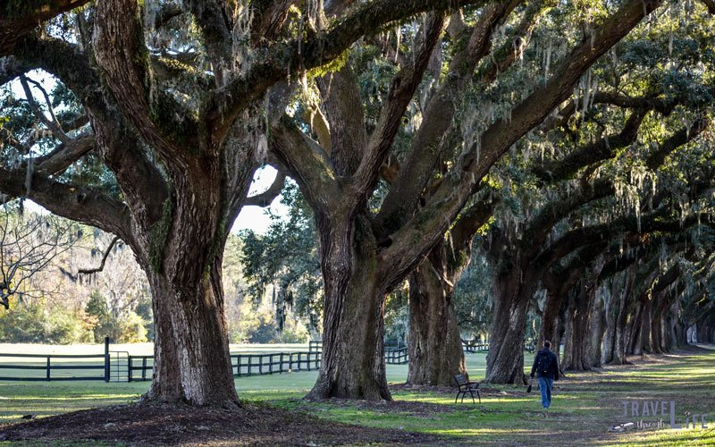 Charleston Boone Hall Plantation and Gardens Travel Through Life