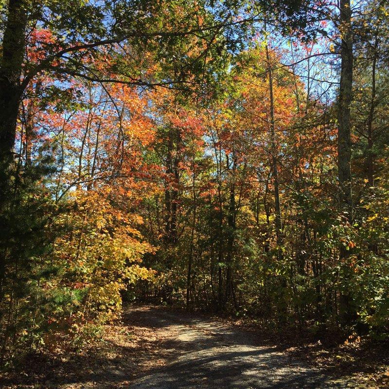 Fall foliage North Georgia Photo by Karon Warren