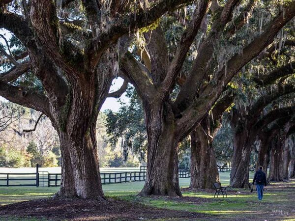 Places to Visit in the US during Fall Charleston SC Image