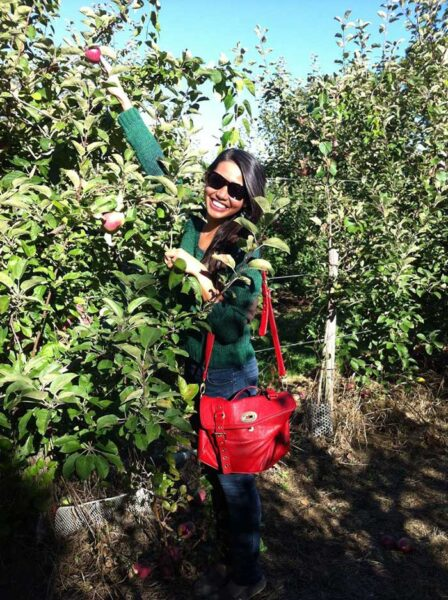 Places to visit in the us during fall ApplePicking in Ipswich Massachusetts